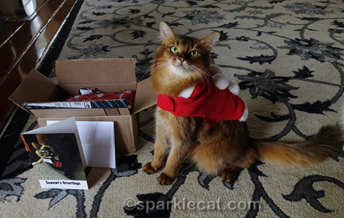 somali cat getting ready to ship her secret paws gifts.