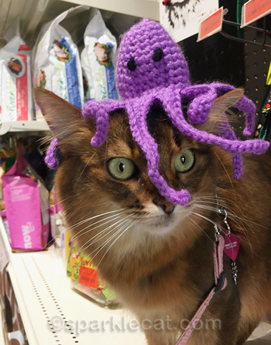 somali cat with octopus cat toy on her head