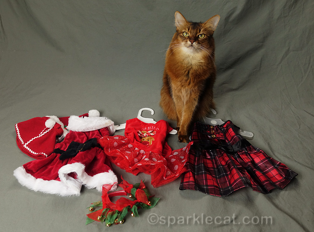 somali cat with her holiday wardrobe