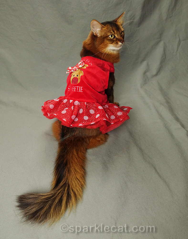 somali cat wearing Santa's Sweetie dress