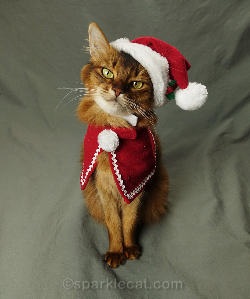 somali cat wearing a Santa hat and red cape