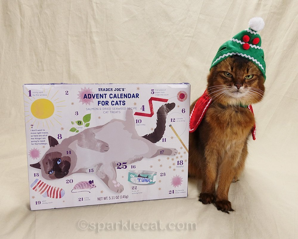 somali cat not happy with holiday hat