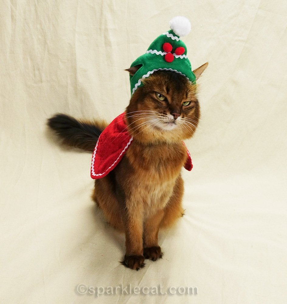 somali cat looking sketchy while wearing holiday hat