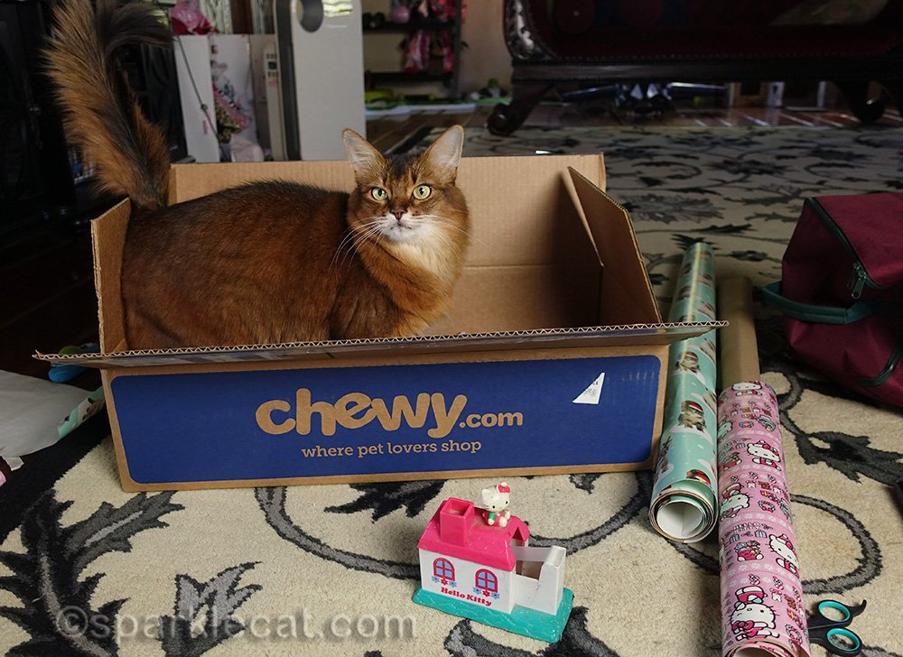 Somali cat in box with Secret Paws gifts