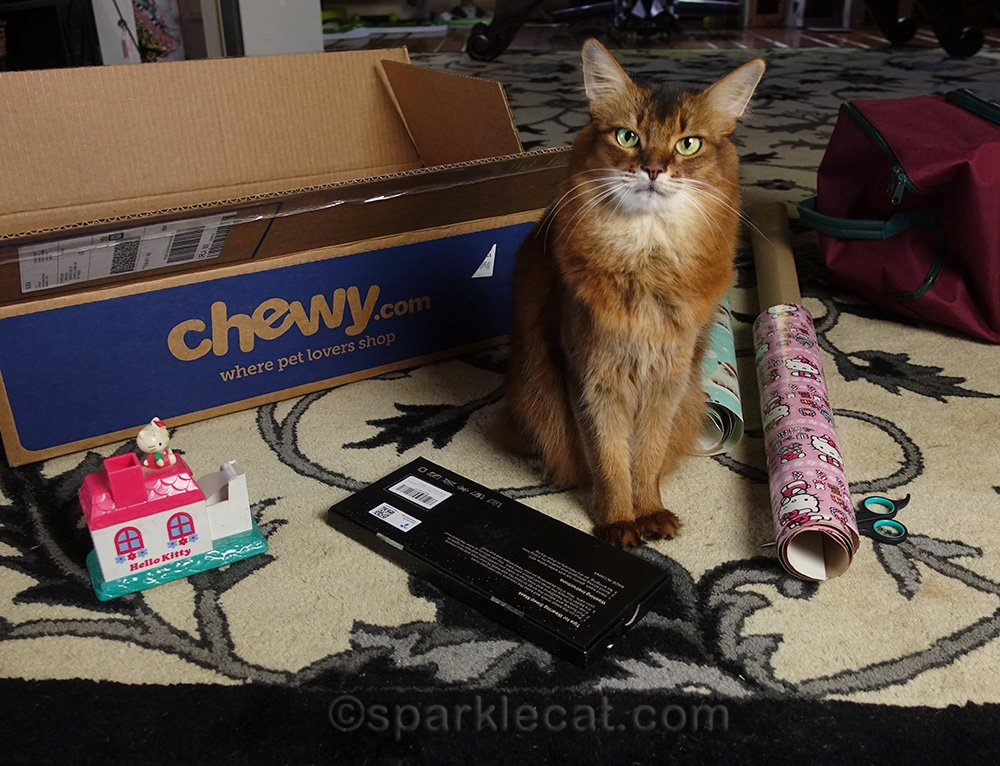 somali cat with gift ready to wrap