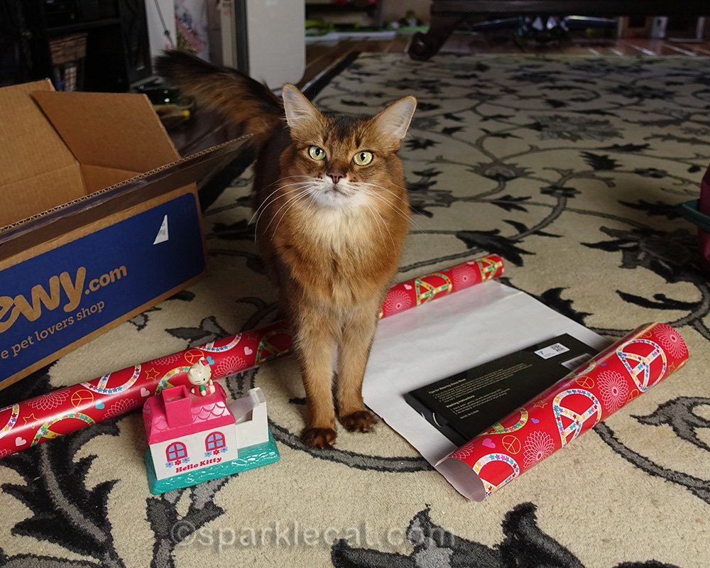 somali cat with gift in mid-wrap