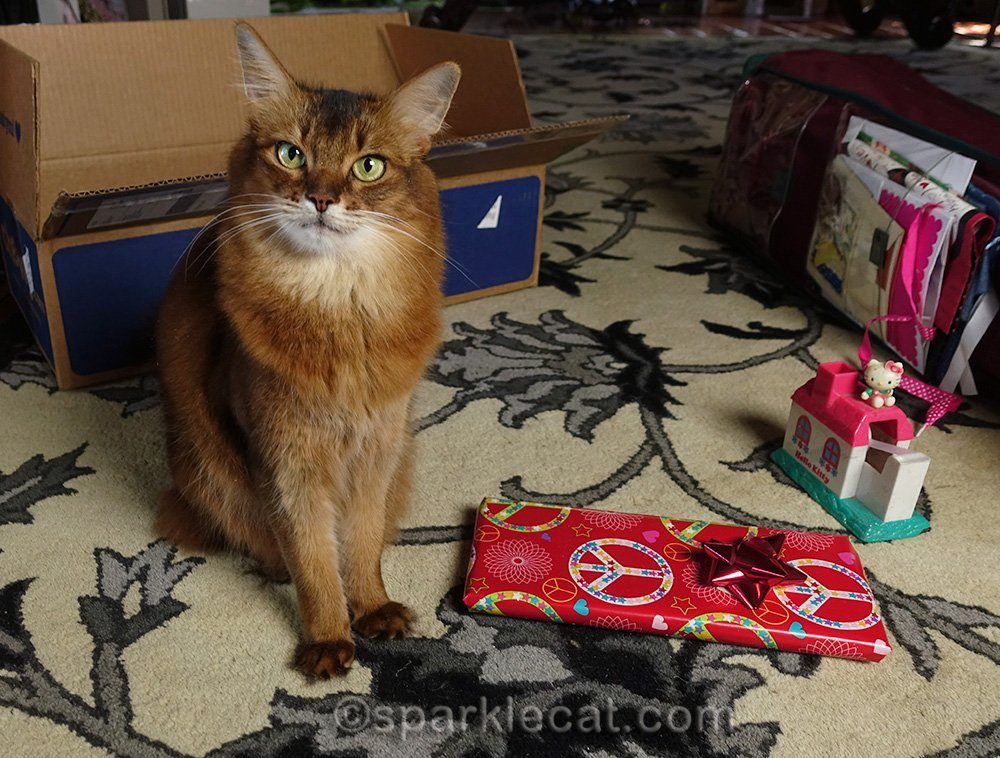 Somali cat with wrapped present