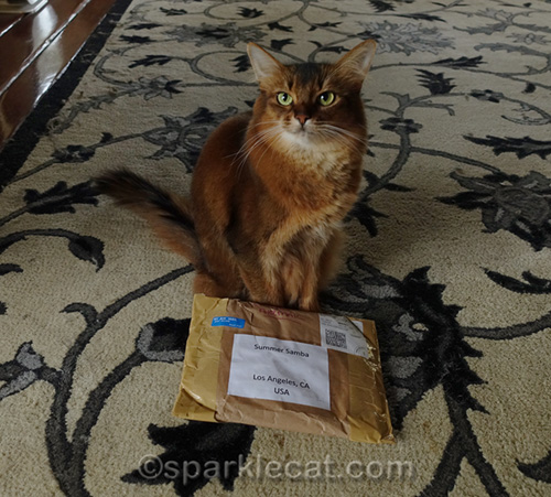 somali cat with package from the U.K.