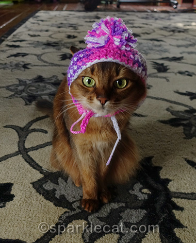 somali cat wearing knitted chullo hat
