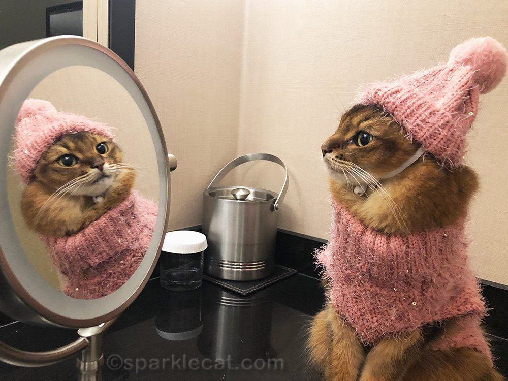 somali cat looking at self in mirror