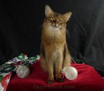 Give Your Kitty a Magical – and Safe – Holiday with Tips from Me and PetMD