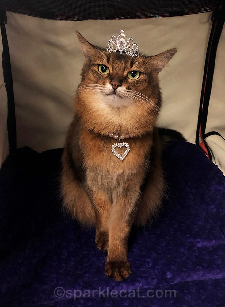 somali cat wearing a tiara and pearl and rhinestone heart necklace