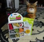 Summer shares some cat toys and treats she got from pawTree.