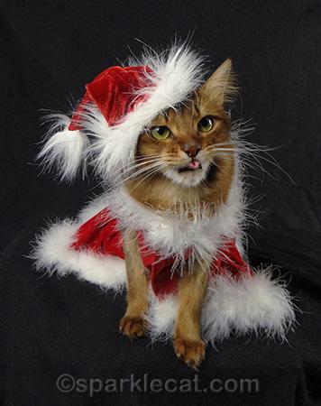 Santa cat, Somali cat, Santa kitty, cat Christmas costumes