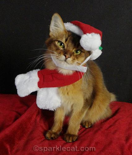 somali cat poses in santa hat and scarf