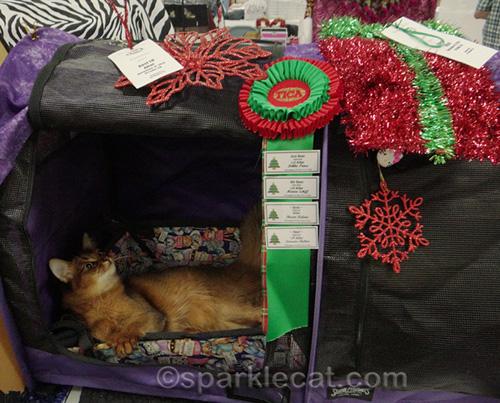 somali cat with ribbons at holiday cat show