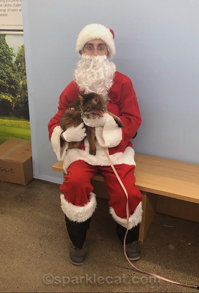 somali cat NOT posing with Santa Claws