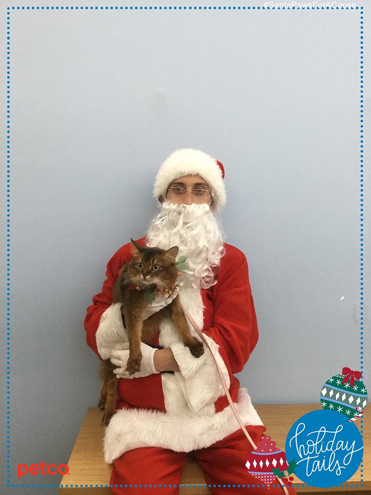 somali cat still not posing with Santa