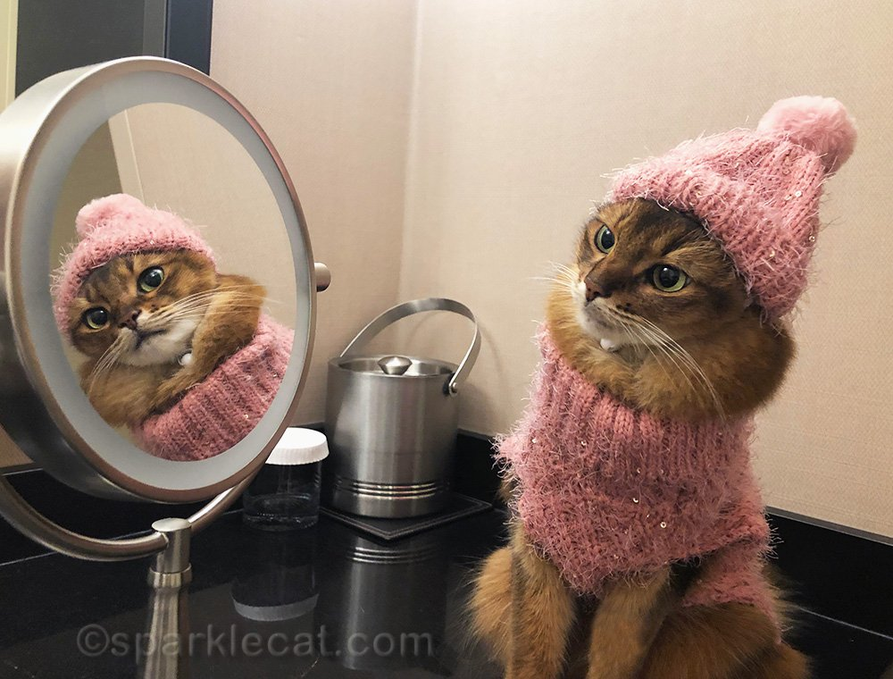 somali cat in pink hat and sweater, admiring self in mirror