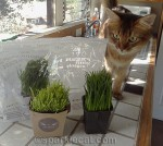 How Whisker Greens #PetGrass Fared Here – and Who Liked It Best!