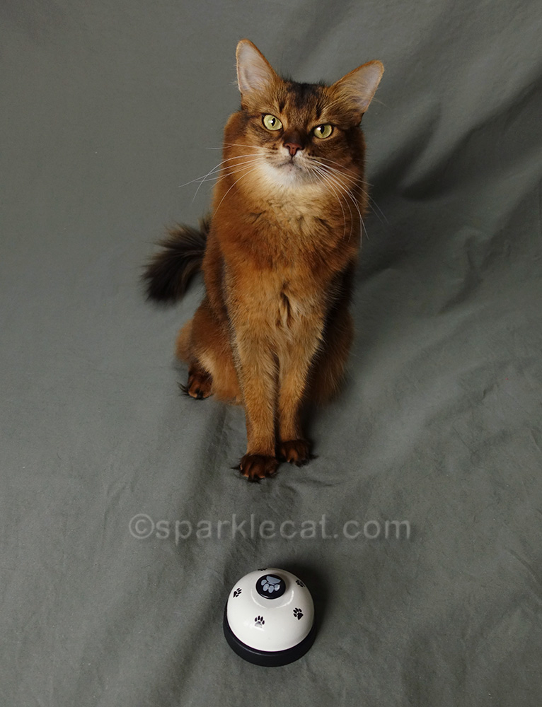 somali cat with her desk bell