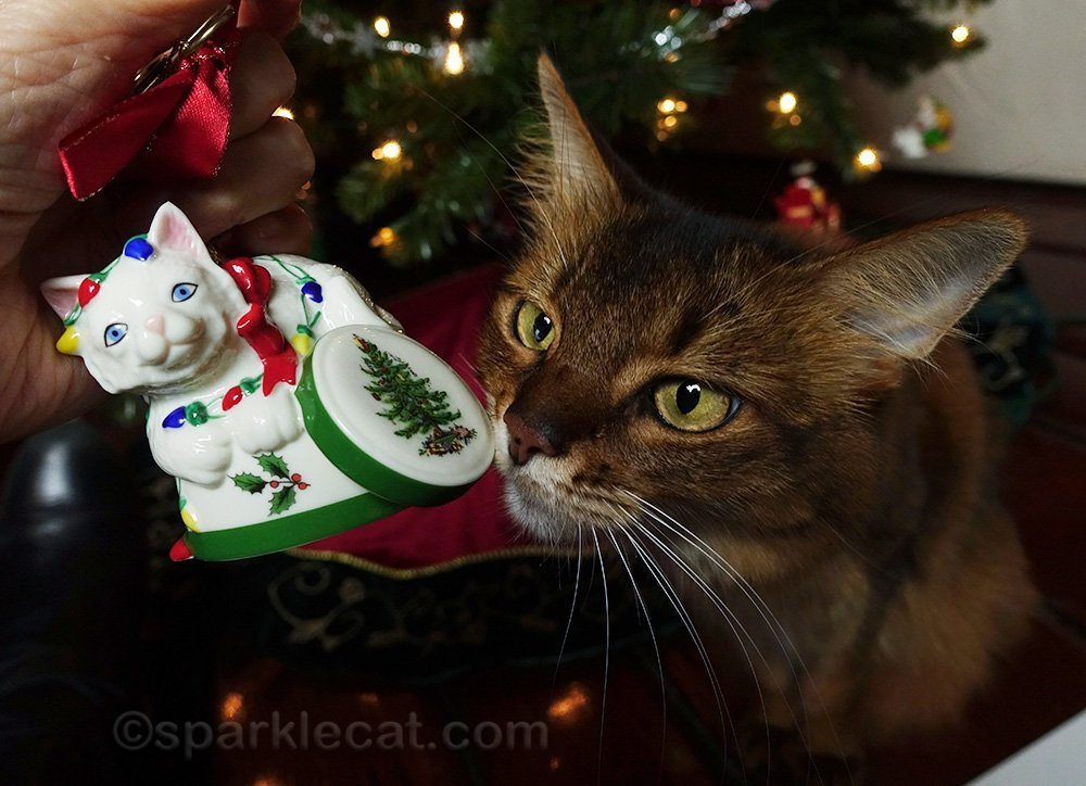 somali cat looking at ceramic cat ornament