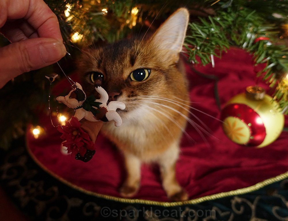 somali cat looking at delicate cat ornament
