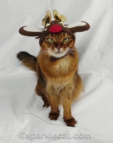somali cat wearing reindeer hat
