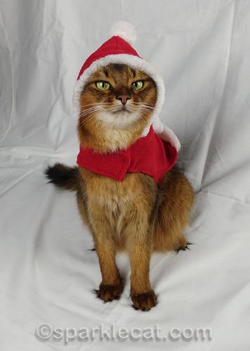 somali cat wearing santa coat and hat combo