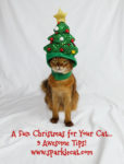 A Fun Christmas for Your Cat? Here Are 9 Tips!