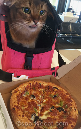 somali cat sticking tongue out at airport pizza
