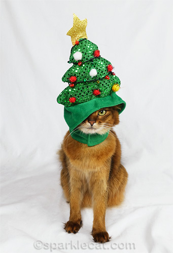 somali cat with christmas tree hat over one eye