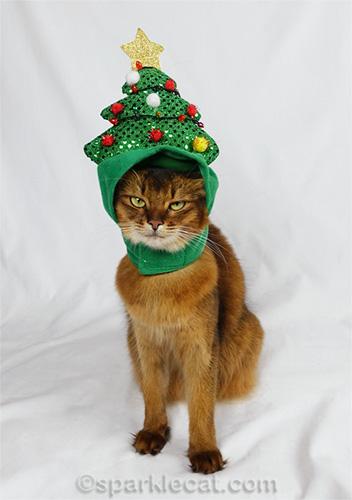 somali cat awkwardly wearing Christmas tree hat