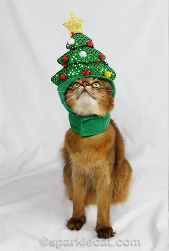 somali cat looking up at Christmas tree hat