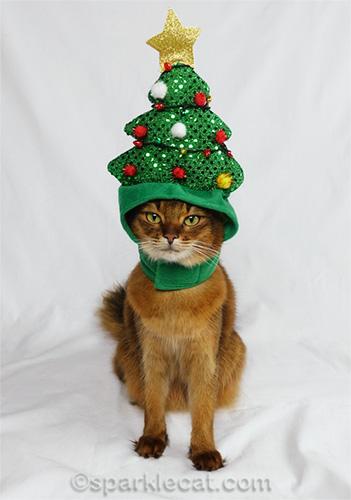 somali cat wearing Christmas tree hat