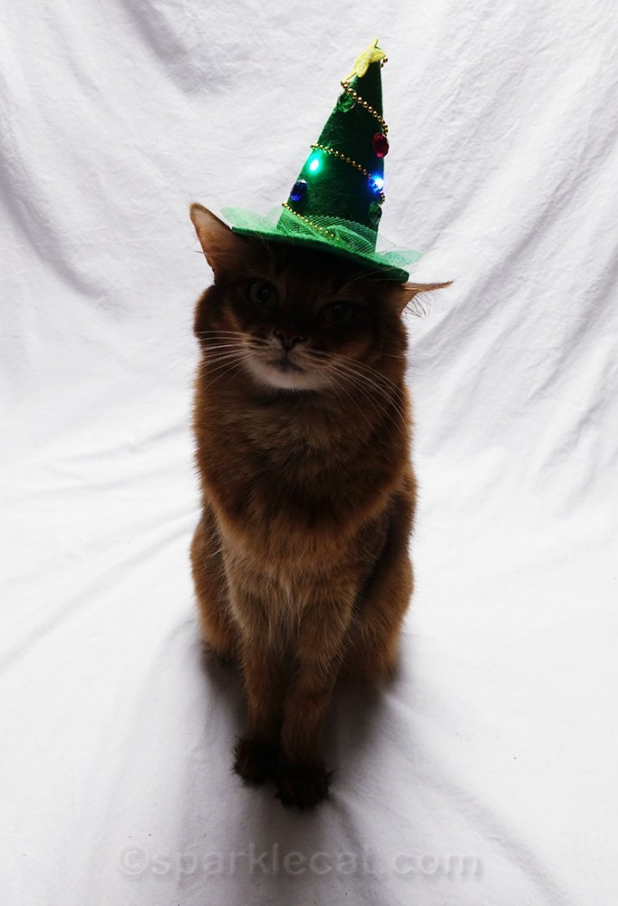 somali cat in dark with hat lit up