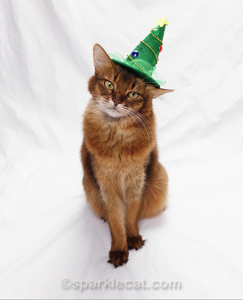 somali cat not sorry that hat lights broke