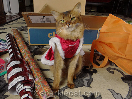 Somali cat, cat christmas dress, Christmas cat, present wrapping with cat