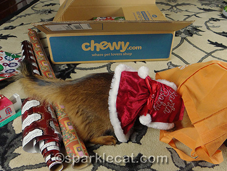 Somali cat, cat Christmas dress, Santa Baby cat dress, cat present wrapping