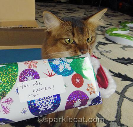 Somali cat, Christmas gift, cat Christmas