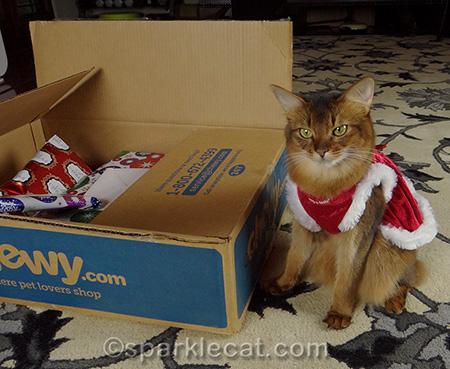 Somali cat, cat Christmas dress, cat presents, Secret Paws