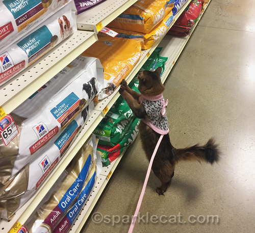 somali cat looking at dog food in pet store