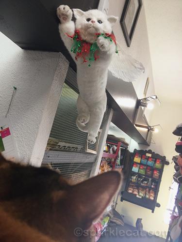 somali cat staring at kitty Christmas decor