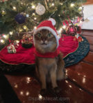Santa Cat Outtakes