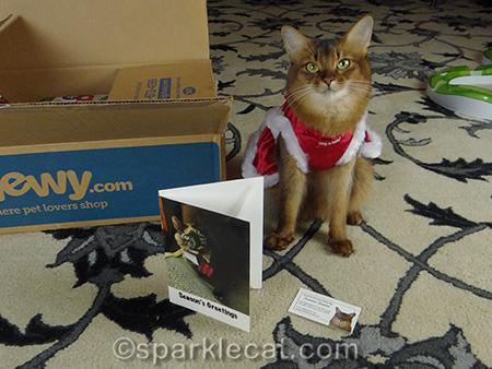 tortoiseshell cat card, somali cat, cat in Christmas dress