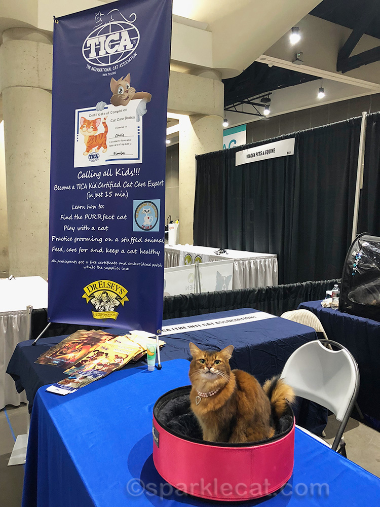 somali cat at TICA booth at WAG Petcon