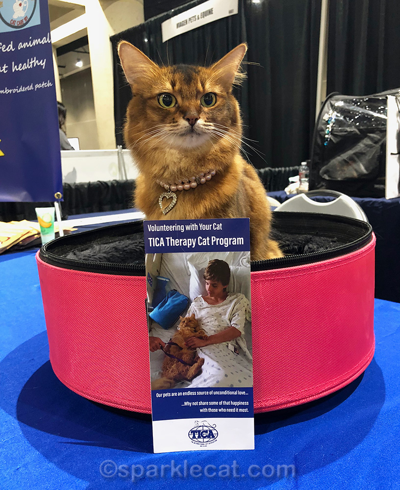 therapy cat with TICA therapy cat brochure