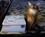somali cat with secret paw box