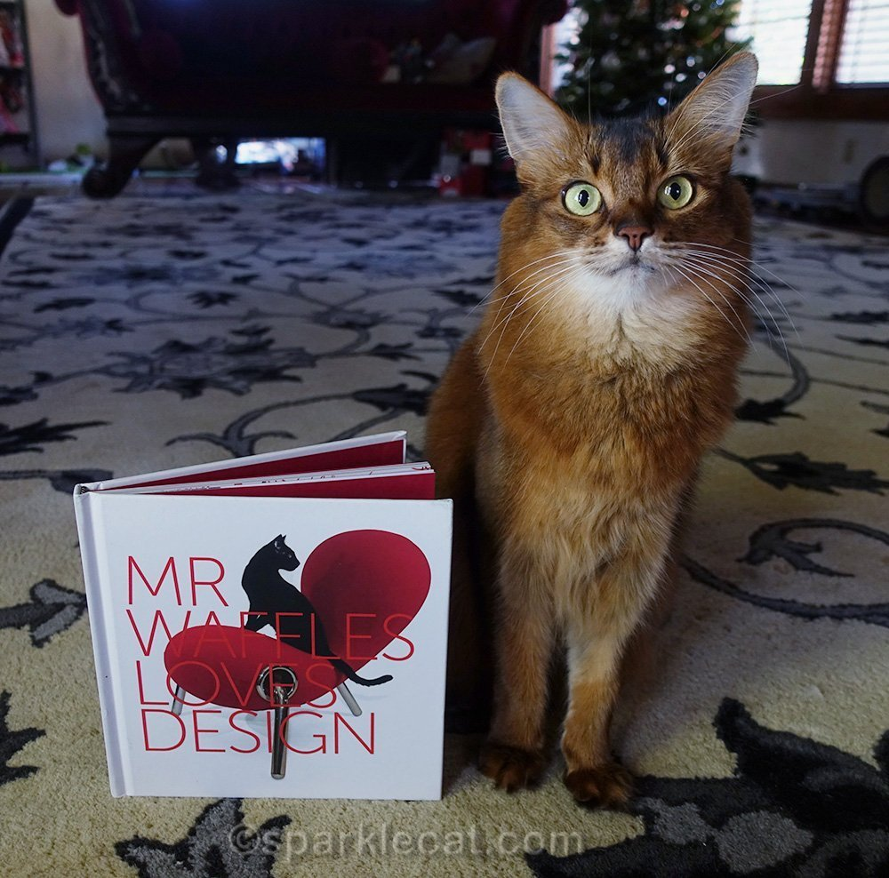 somali cat with Mr. Waffles Loves Design book