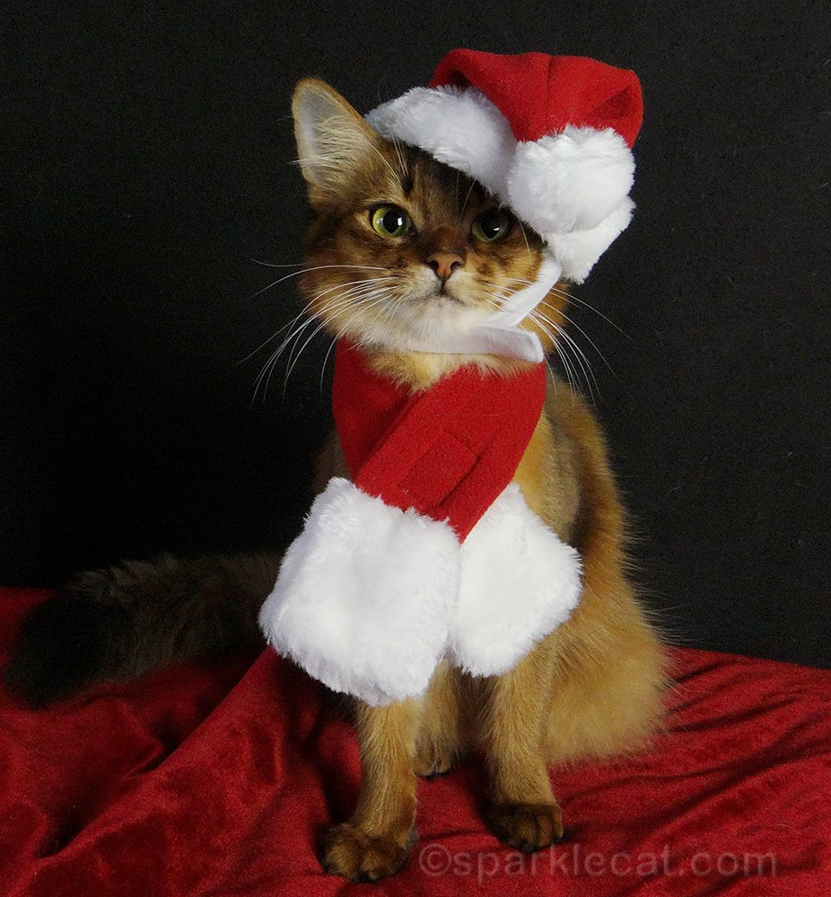 Summer shares memories of Christmases past, specifically 2014 and 2015, with Binga, Boodie, and cat shows.